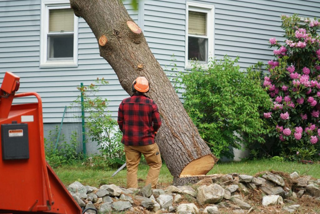 Tree Service in Coquitlam, BC