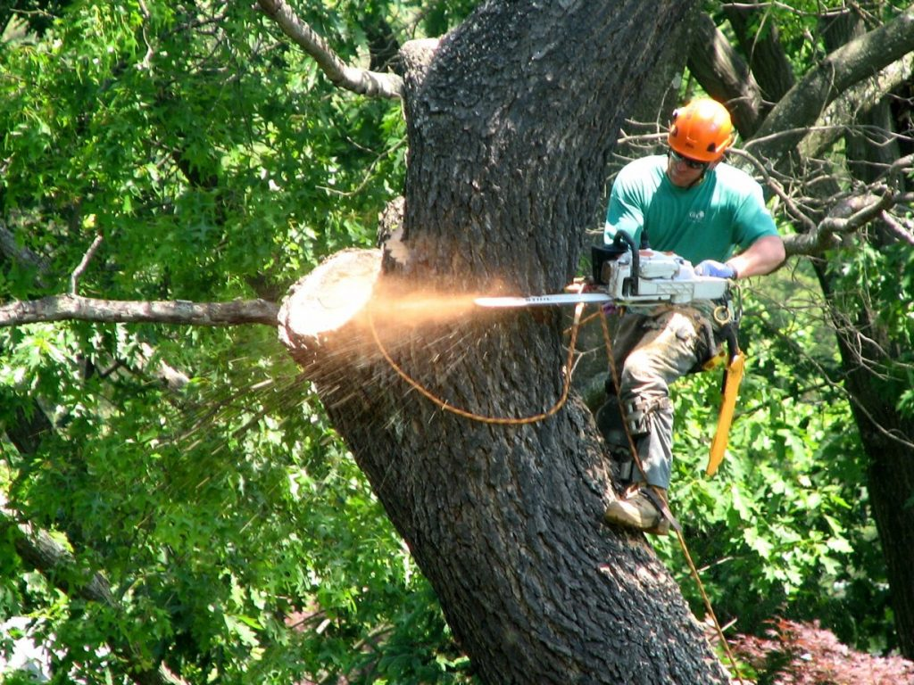 Tree Service in Coquitlam