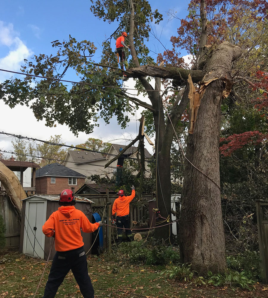 Tree Removal in Coquitlam, BC